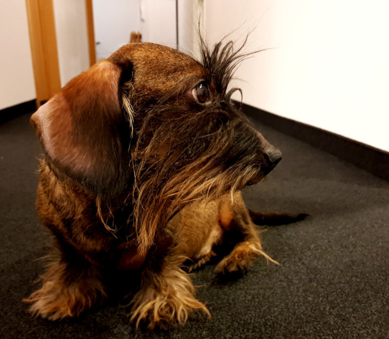 Corporate Benefit Bürohund
